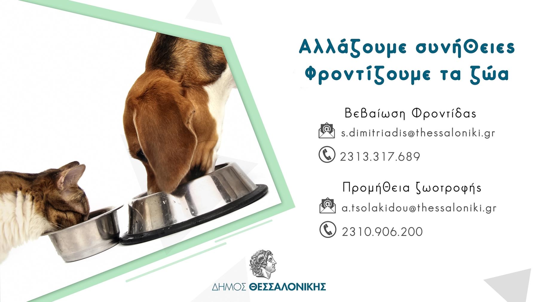 Ο Δήμος Θεσσαλονίκης μεριμνά για τη σίτιση των αδέσποτων ζώων κατά τη διάρκεια των περιοριστικών μέτρων