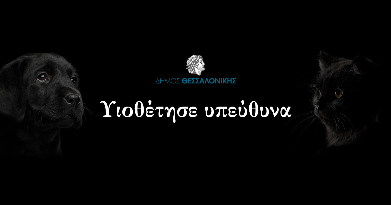 Δήμος Θεσσαλονίκης – Σε πιλοτική λειτουργία η πλατφόρμα υιοθεσίας αδέσποτων ζώων